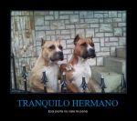 CR_444205_tranquilo_hermano
